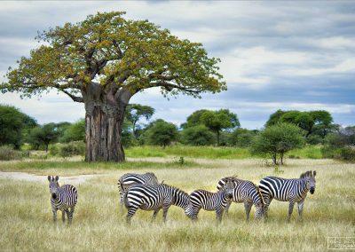 reisefotografie_afrika_tansania_tierwelt_karin_trinh