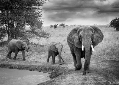 reisefotografie_afrika_tierwelt_elefant_karin_trinh